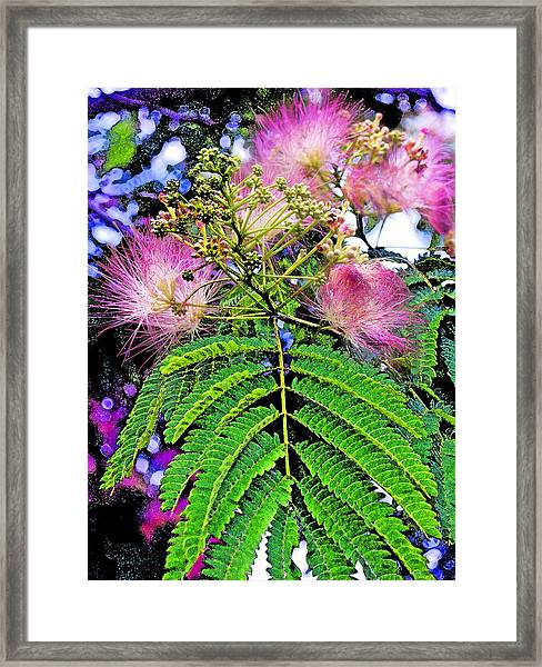 Mimosa One Framed Print