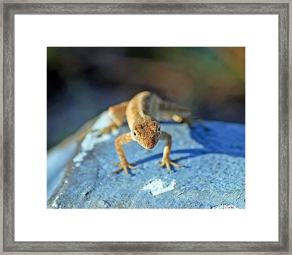 Mini Attitude Framed Print