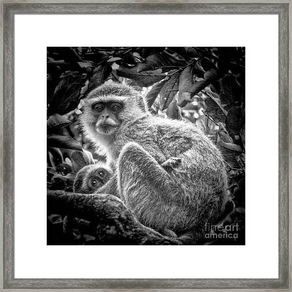 Mini Me Monkey Framed Print