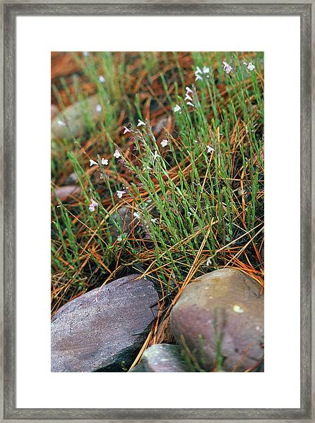 Miniature Bells Framed Print