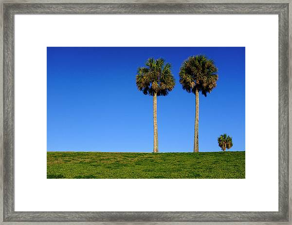 Minimal Palm Trees On A Hill In Saint Augustine Florida Framed Print
