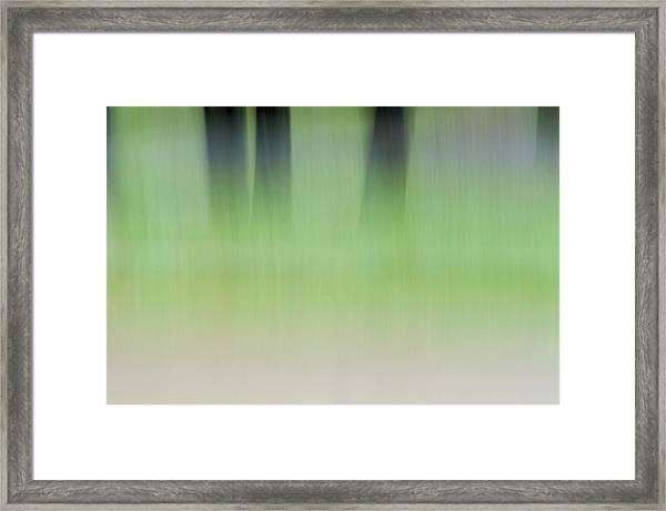 Mint Slice Framed Print