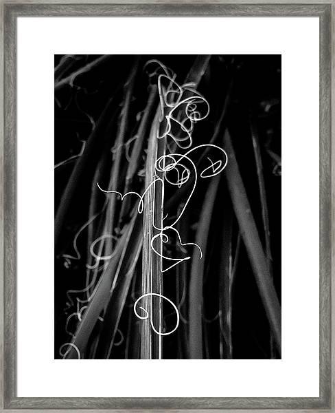 Miro In The Desert Framed Print
