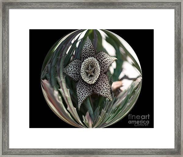 Captured Carrion Succulent Framed Print