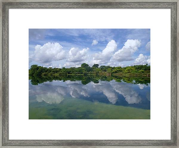 Mirrored Framed Print by Tammy Chesney
