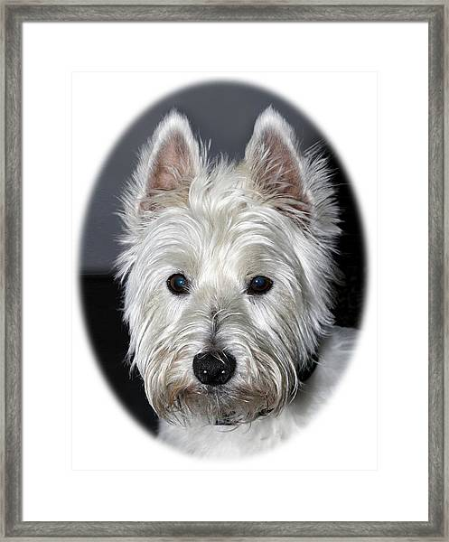 Framed Print featuring the photograph Mischievous Westie Dog by Bob Slitzan