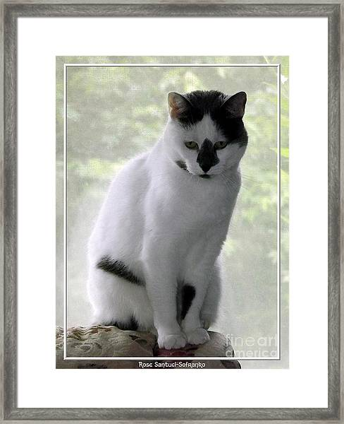 Miss Jerrie Cat With Watercolor Effect Framed Print
