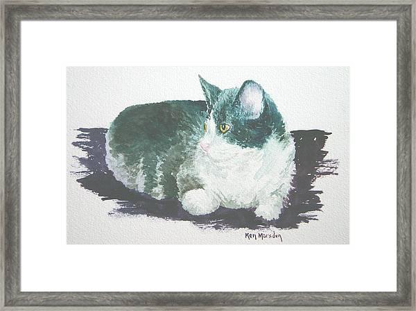 Miss Kitty Framed Print
