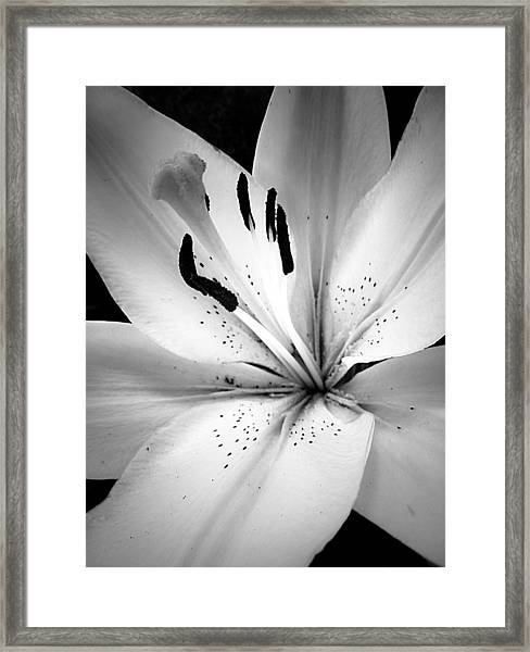 Miss Lily In Black And White Framed Print