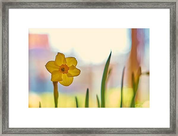 Miss Yellow Framed Print
