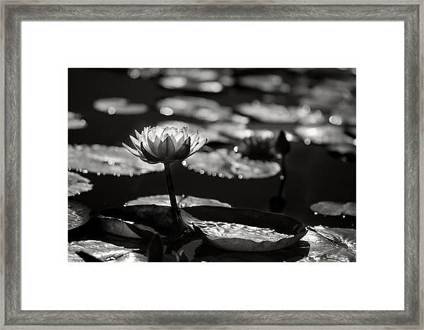 Mission Lotus Framed Print
