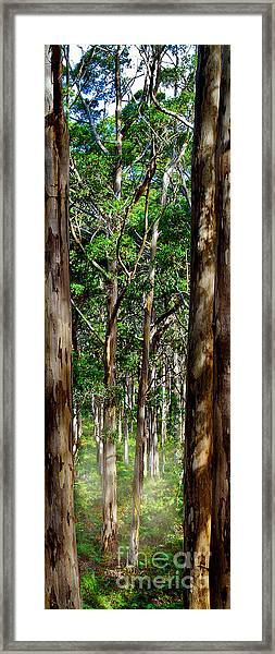 Mist In The Forest Framed Print