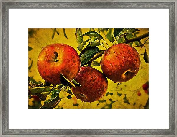 Mister's Apples Framed Print