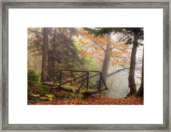 Misty Forest Framed Print