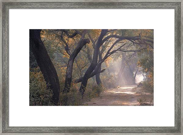Misty Morning, Bharatpur, 2005 Framed Print