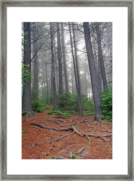 Misty Morning In An Algonquin Forest Framed Print