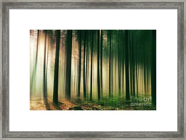 Misty Morning Light Framed Print