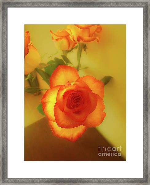 Misty Orange Rose Framed Print