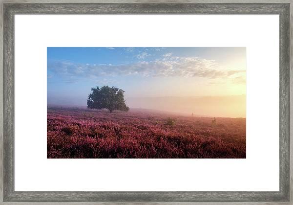 Misty Posbank Framed Print