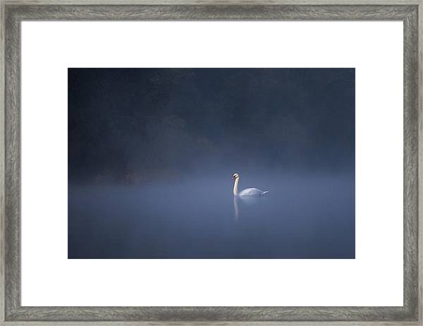 Misty River Swan Framed Print
