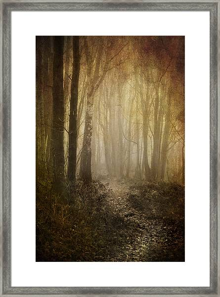 Misty Woodland Path Framed Print