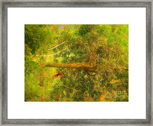 Misty Yellow Hue- Ringed Kingfisher In Flight Framed Print