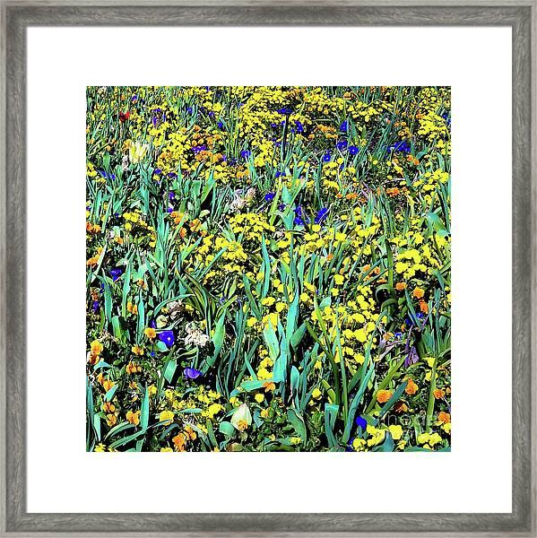 Mixed Flower Garden 515 Framed Print