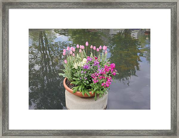 Mixed Flower Planter Framed Print