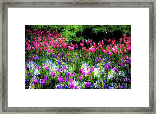 Mixed Flowers With Tulips Framed Print by D Davila