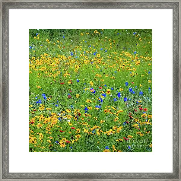 Mixed Wildflowers In Bloom 538 Framed Print