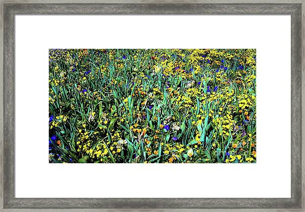 Mixed Wildflowers In Texas Framed Print