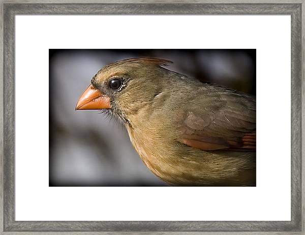 Miz Red Bird Framed Print