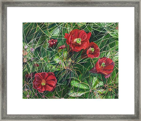 Mohave Mound Cactus Framed Print