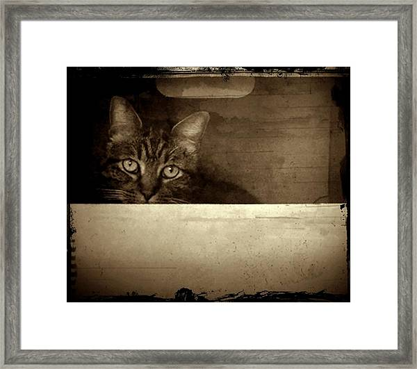 Mollie In A Box Framed Print