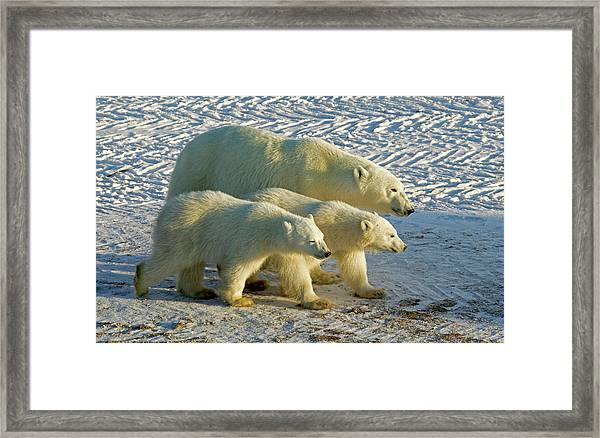 Mom And Babies Framed Print