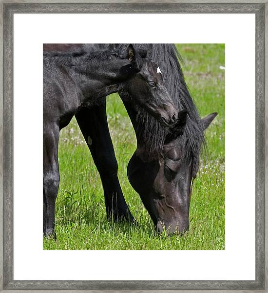 Momma And Baby Framed Print