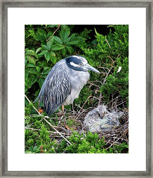 Mommy And Baby Framed Print