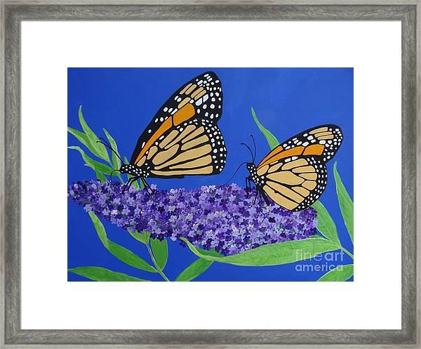 Monarch Butterflies On Buddleia Flower Framed Print