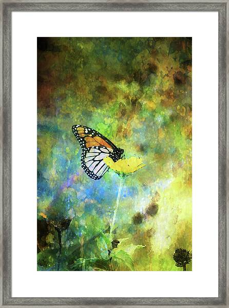 Monarch In Azure And Gold 5647 Idp_2 Framed Print