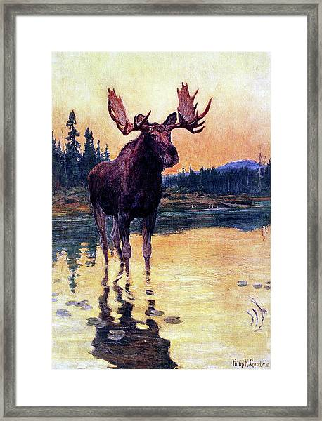 Monarch Of The North Framed Print by Philip R Goodwin