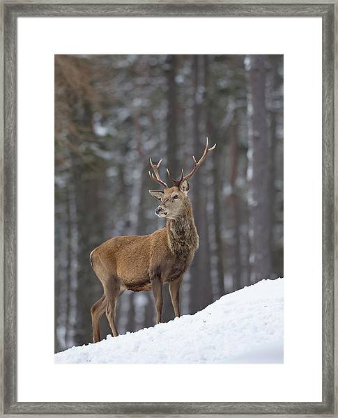 Monarch Of The Woods Framed Print