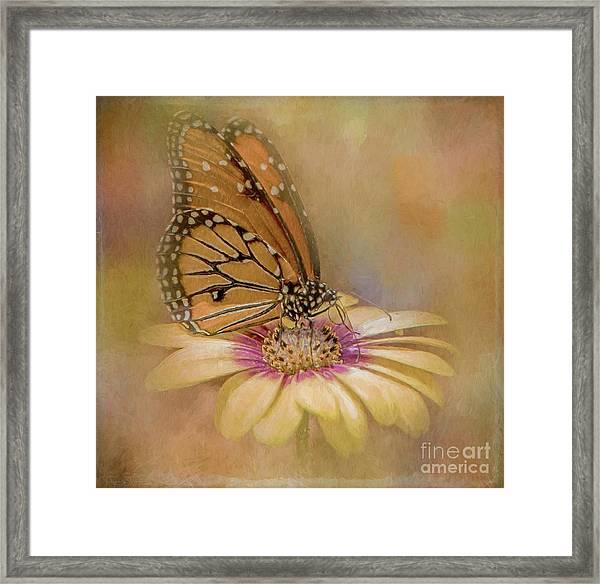Monarch On A Daisy Mum Framed Print