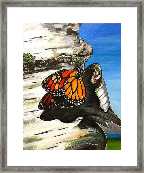 Monarch On Birch Framed Print