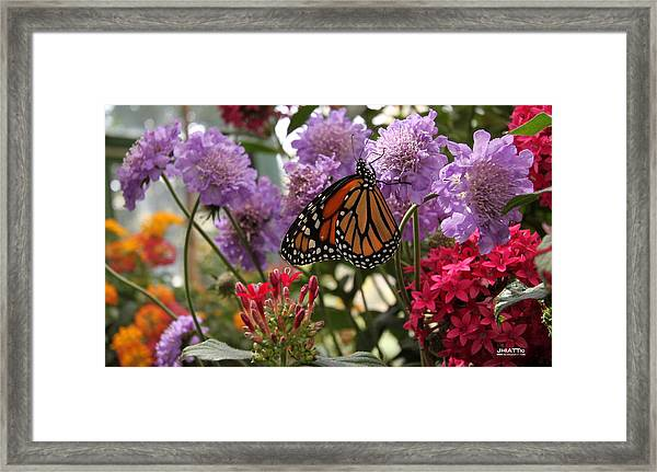 Monarch Playground Framed Print