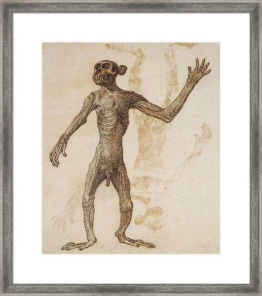 Monkey Standing, Anterior View Framed Print