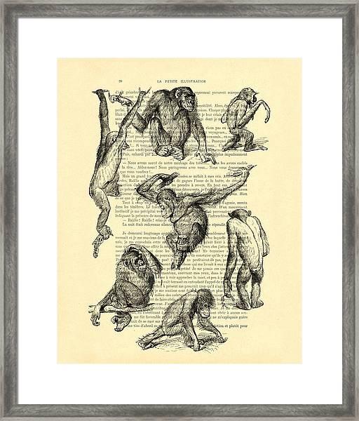 Monkeys Black And White Illustration Framed Print