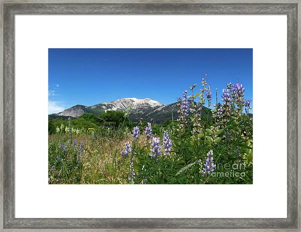 Mammoth Meadow   Framed Print