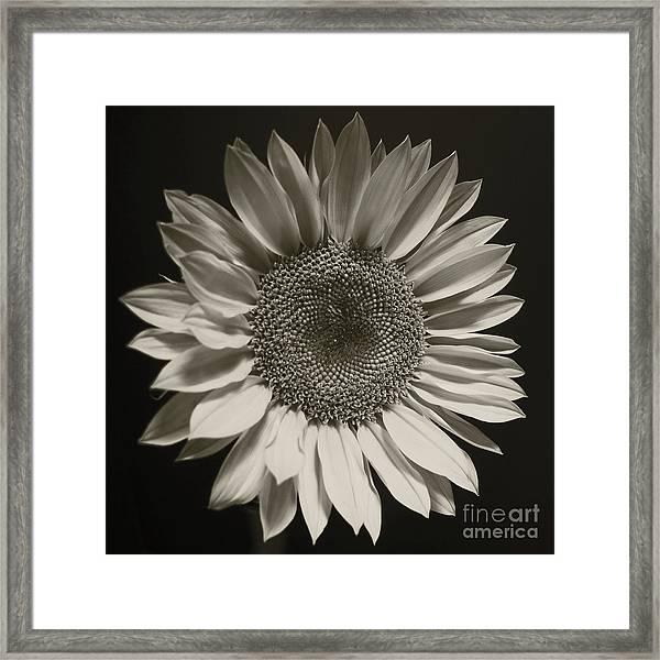 Monochrome Sunflower Framed Print