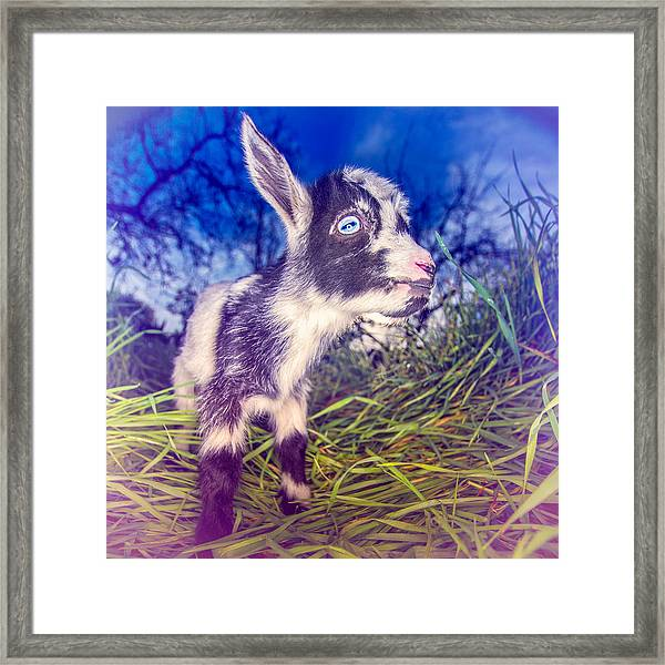 Moo Cow Love Grass Framed Print