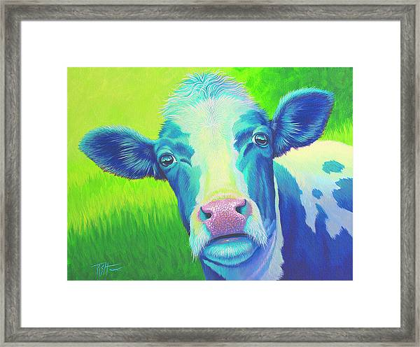 Moo Now Blue Cow Framed Print
